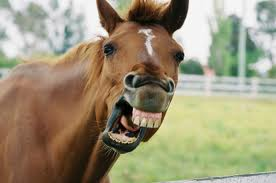 This horse is laughing. Why aren't you?